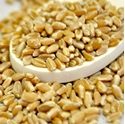 Picture of Wheat Berries (Hard Red) 10 Lb. (1 pcs Case)